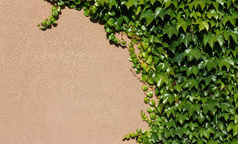 Gemeinsame Gartenmauer streichen » Anleitung in 4 Schritten &KJ_35