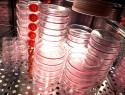 Glas sterilisieren