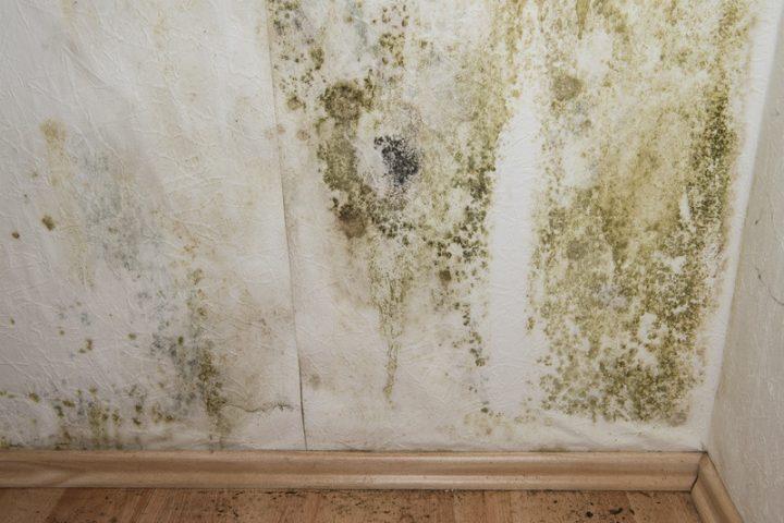 Hohe Luftfeuchtigkeit im Keller