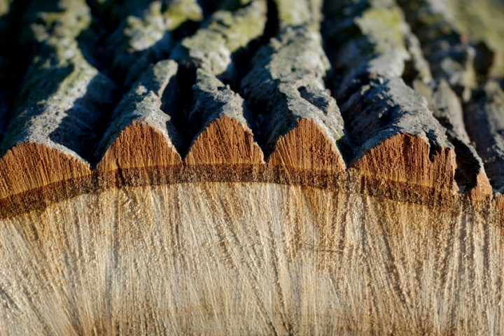 Holz entrinden