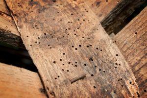 Holzwurm Dachbalken