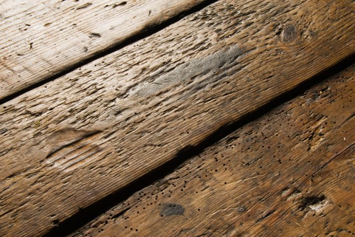 Holzwürmer im Boden