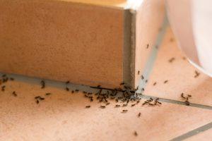 Ameisen bekämpfen Kalk