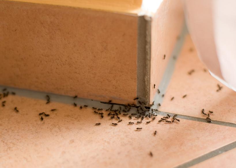 kalk gegen ameisen so setzen sie ihn erfolgreich ein. Black Bedroom Furniture Sets. Home Design Ideas