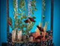 Kaltwasserfische im Aquarium – ein Überblick