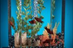 Kaltwasserfische Aquarium