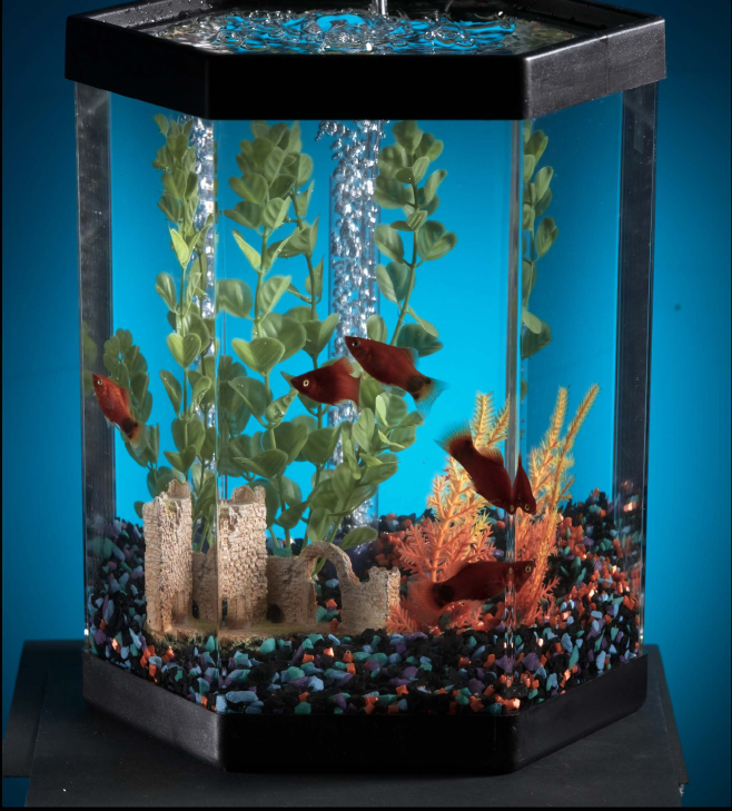 Kaltwasserfische f rs aquarium diese fische eignen sich for Aquarium heizen