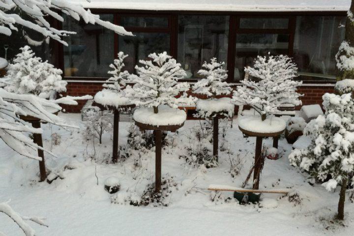 Kaltwintergarten Vor und Nachteile