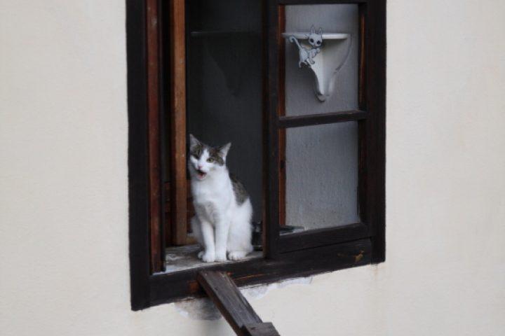 Katzentreppe Balkon
