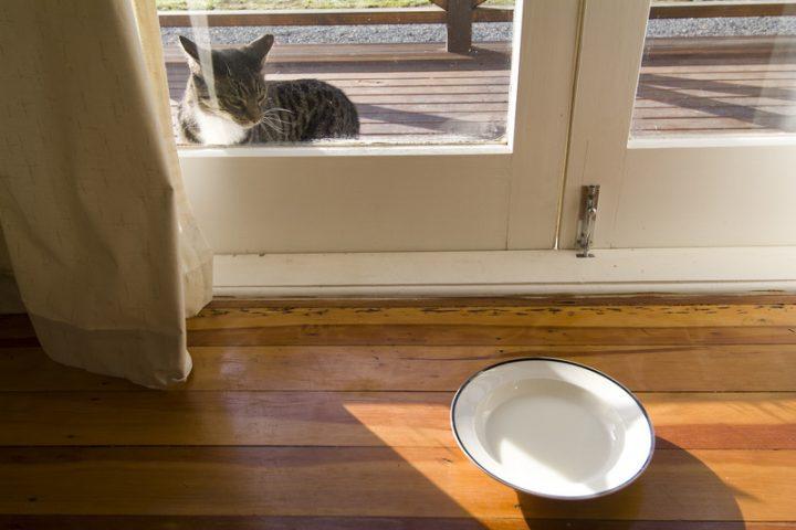 Kellerfenster mit Katzenklappe