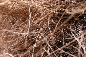 Kokosfaser Dämmung