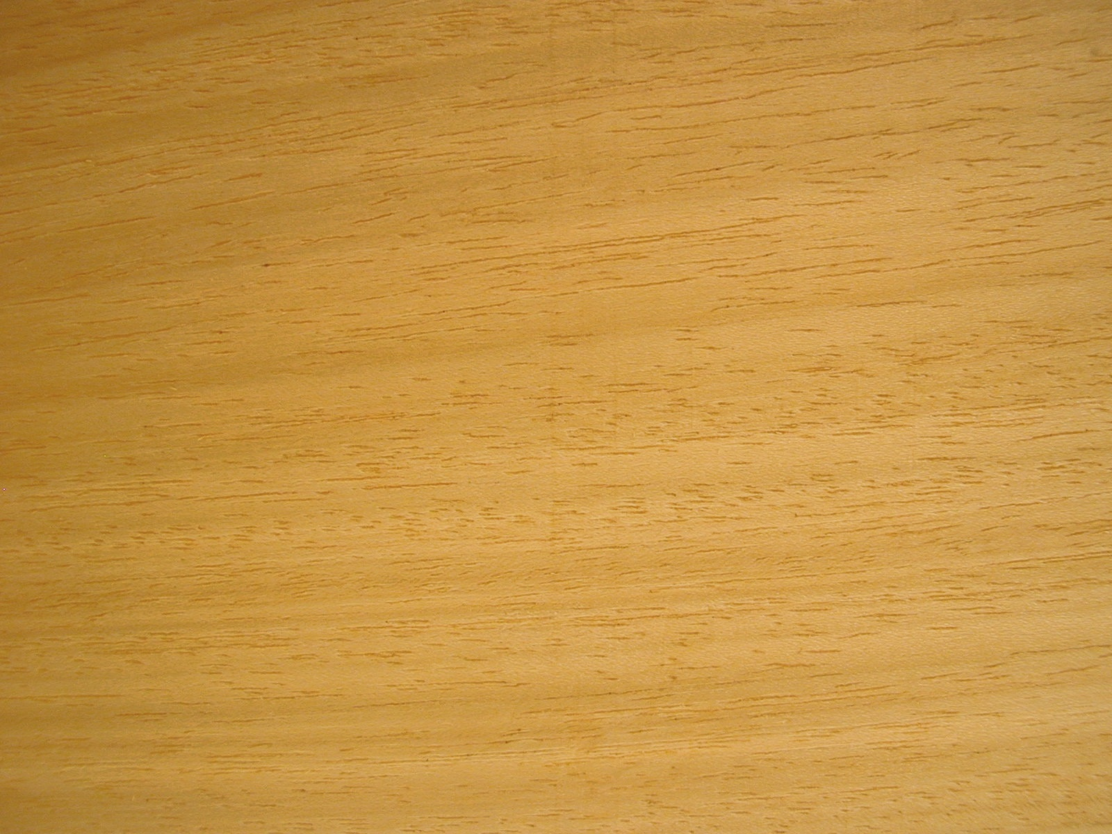 Holzarten Erkennen koto holz eigenschaften verwendung und preise