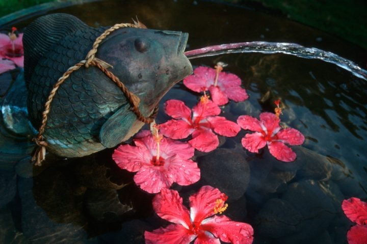 Kupfer im Teich