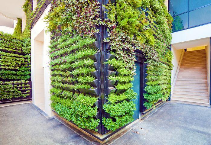 Gartenmauer begrünen