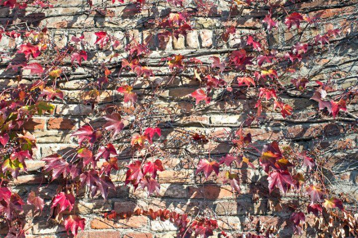 Mauer bepflanzen