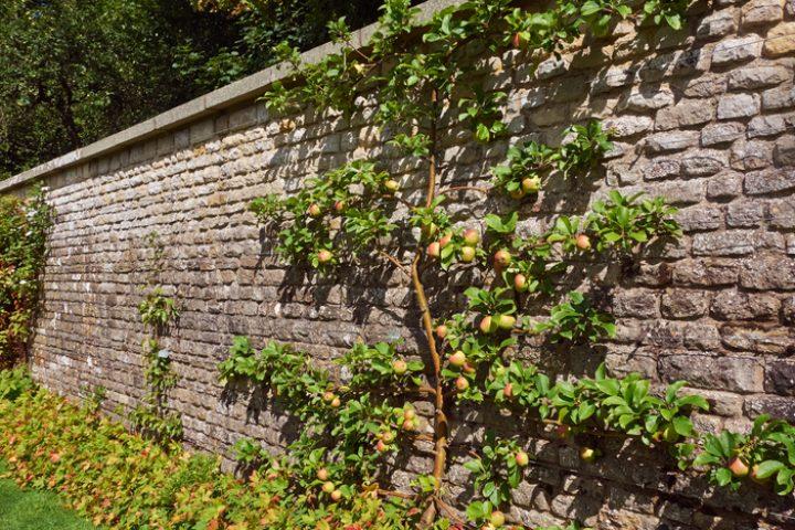 Mauerabdeckung montieren