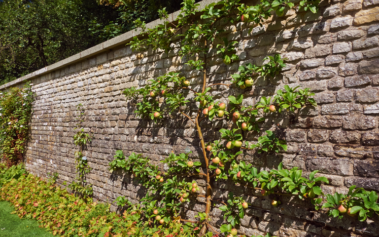 mauerabdeckung verlegen was ist zu beachten. Black Bedroom Furniture Sets. Home Design Ideas
