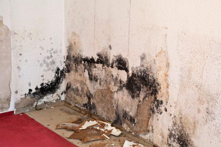 Mauer sanieren