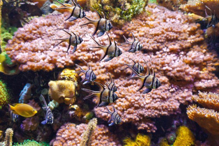 Meerwasseraquarium Kosten