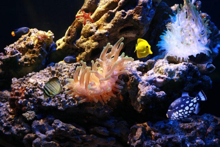 Meerwasseraquarium einfahren
