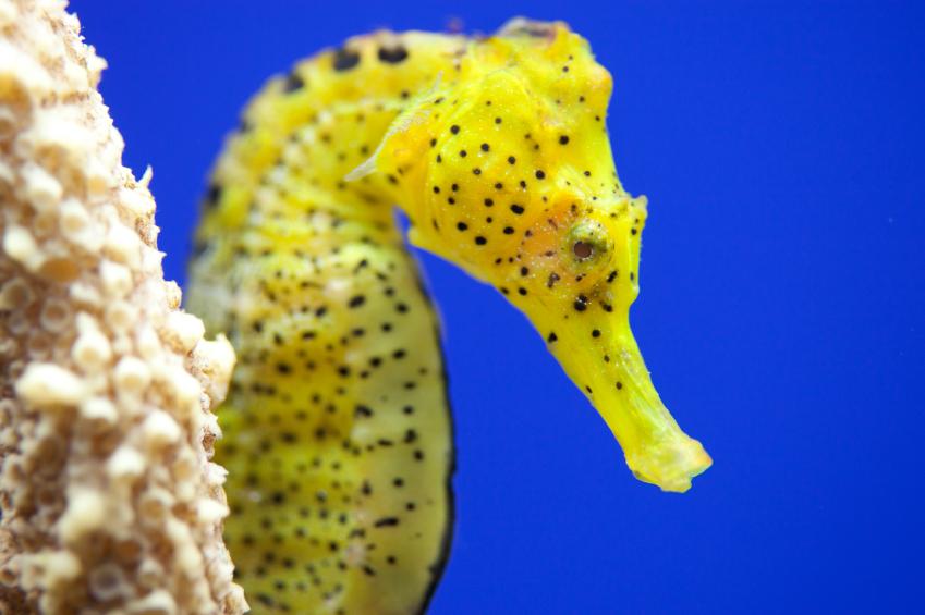 meerwasseraquarium einrichten detaillierte anleitung