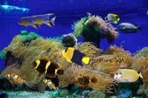 Meerwasseraquarium selber bauen