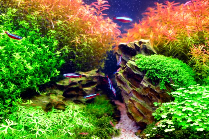 Nano Aquarium Pflanzen