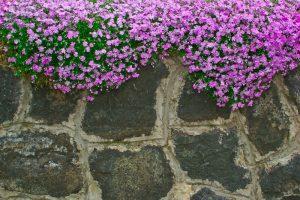Natursteinmauer bepflanzen