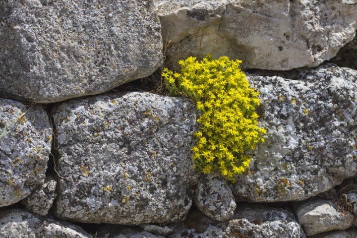 Natursteinmauer setzen