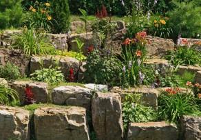 pflanzen f r die trockenmauer diese eignen sich am besten. Black Bedroom Furniture Sets. Home Design Ideas