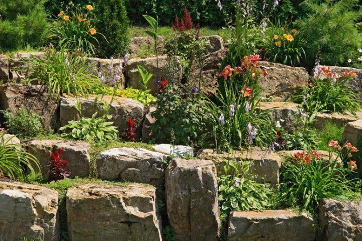 Pflanzen für Trockenmauer