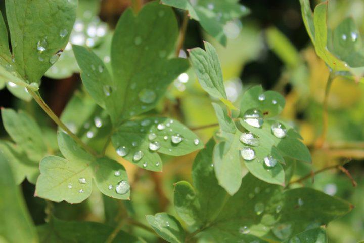 Pflanzenkläranlage Kosten