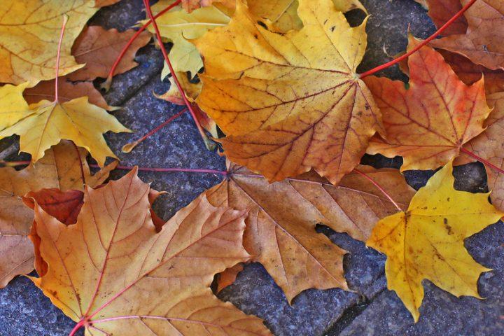 Plastersteine Herbstlaub