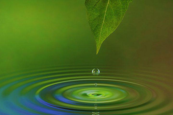 Rohwasser