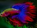 Süßwasseraquarium – tropisches Leben im Wohnzimmer