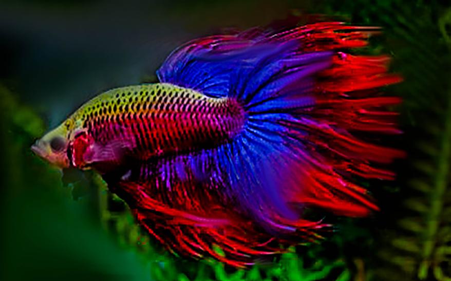 S wasseraquarium der gro e berblick zum thema for Aquarium fische arten