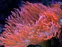 Salzwasseraquarium Kosten