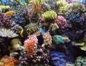 Salzwasseraquarium – Pflege und Reinigung