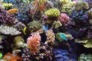 Salzwasseraquarium Pflege