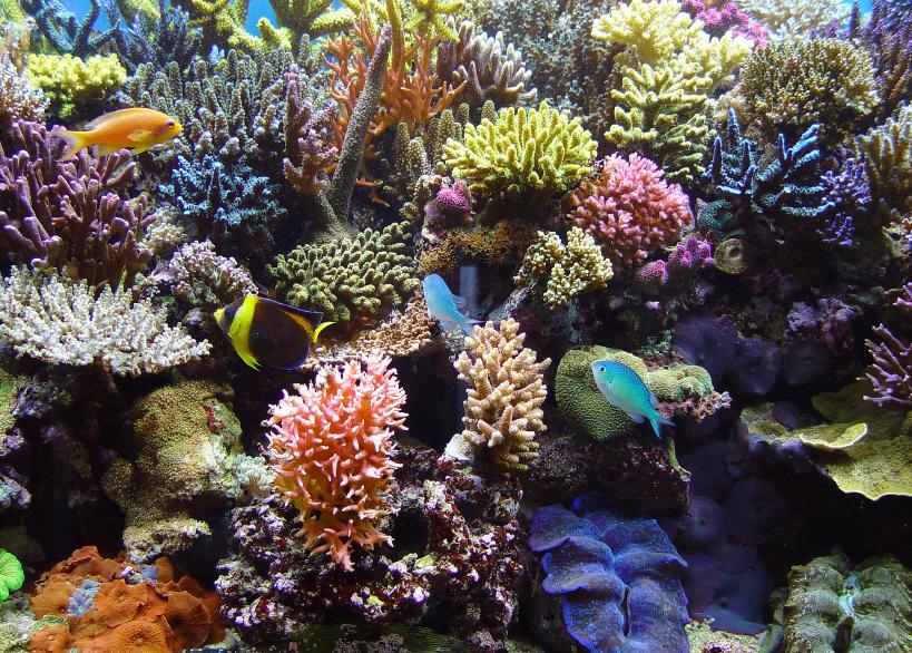 Salzaquarium pflege worauf sie dabei achten sollten for Aquarium heizen