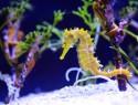 Salzwasseraquarium einrichten