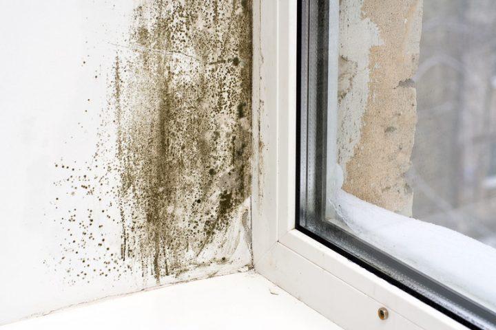 Schimmel Fensterlaibung