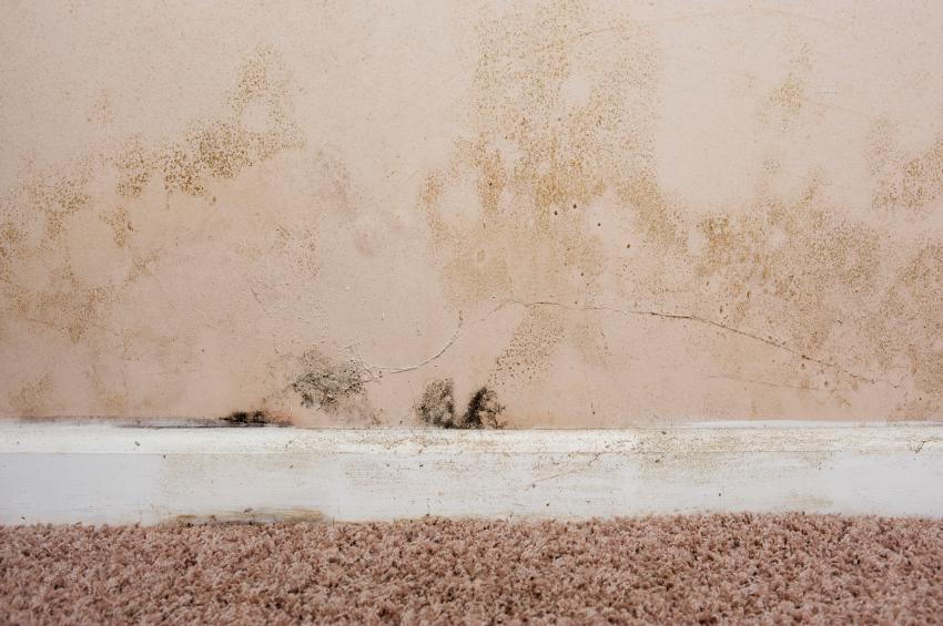 schimmel auf dem teppich was tun. Black Bedroom Furniture Sets. Home Design Ideas