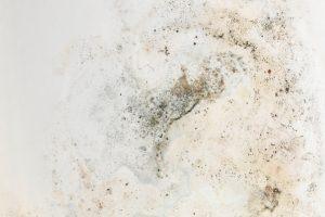 Schimmel Wand Arten