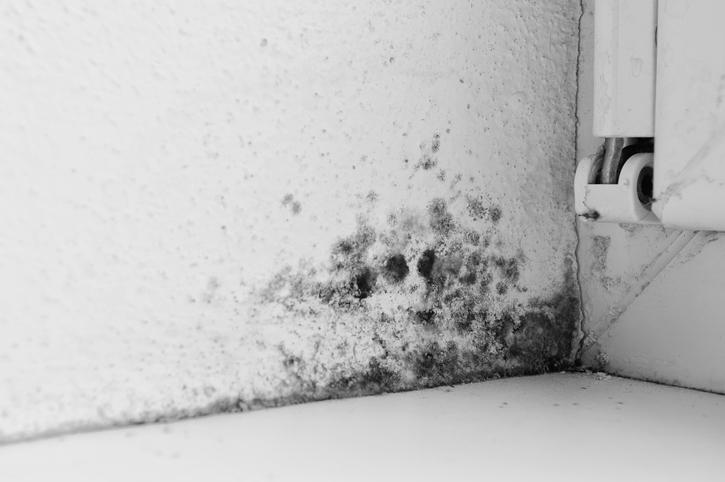 schimmel in der küche » so entfernen sie ihn dauerhaft