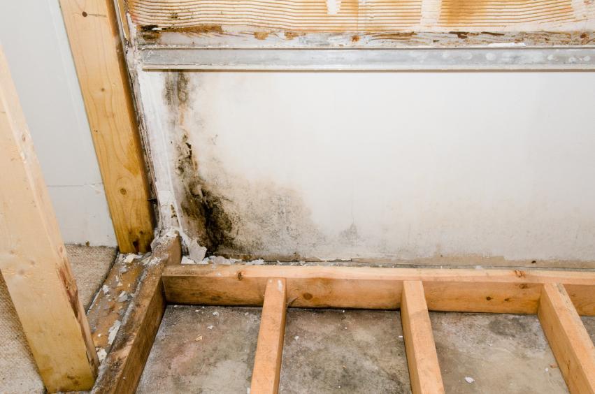 Dämmung Fußboden Unter Estrich ~ Schimmel unter estrich » erkennen & entfernen