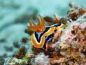 Schnecken im Aquarium – Haltung und Beseitigung