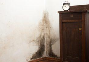 schwarzer schimmel wie ist dagegen vorzugehen. Black Bedroom Furniture Sets. Home Design Ideas