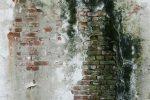 Mauer schwarzer Schimmel
