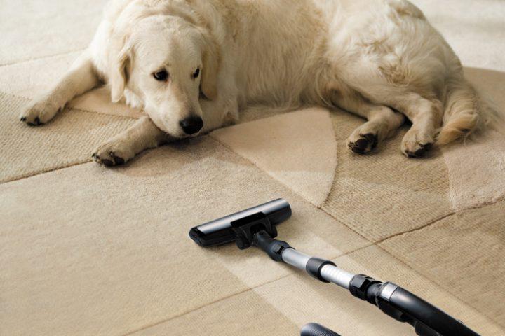 Staubsauger für Hunde